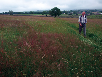 Herb-rich meadow